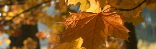 Autumn-Resolutions-630x200