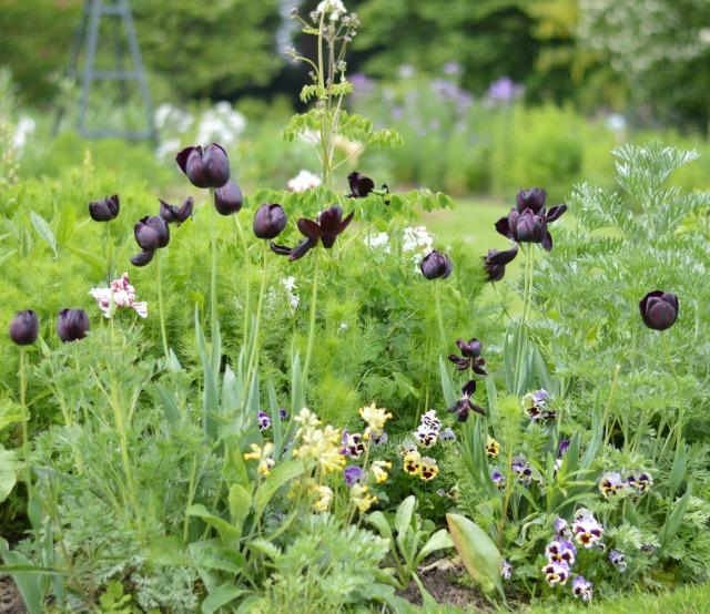 Osterley Garden 3