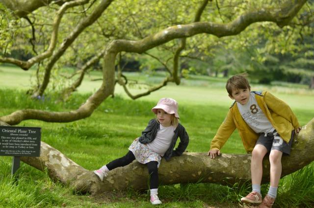 Osterley Garden 5