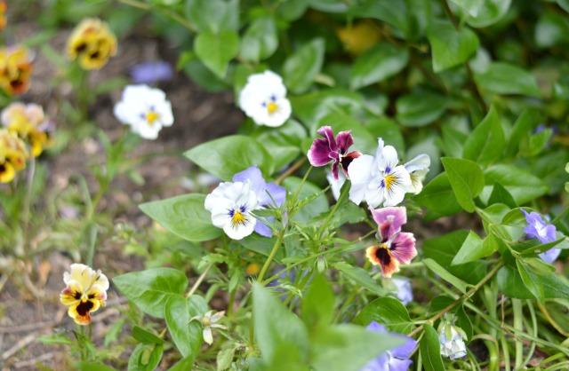 Osterley Garden1